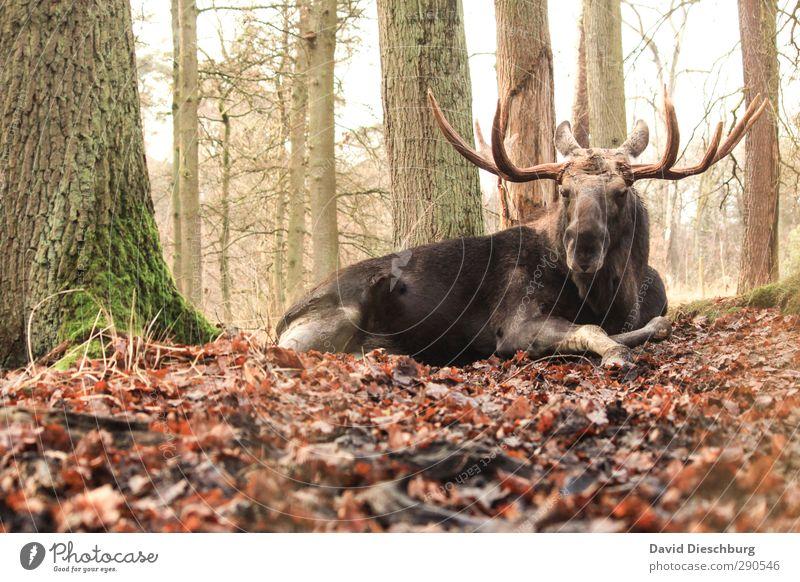 Prachtkerl II grün weiß Baum Tier Blatt schwarz Wald gelb braun liegen orange Wildtier groß gefährlich Fell Tiergesicht