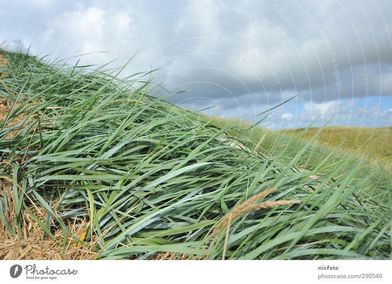 Mit dem Wind Umwelt Natur Landschaft Pflanze Tier Sand Wasser Klima Wetter Schönes Wetter Gras Wellen Küste Strand wandern frei blau grün Zufriedenheit Freiheit