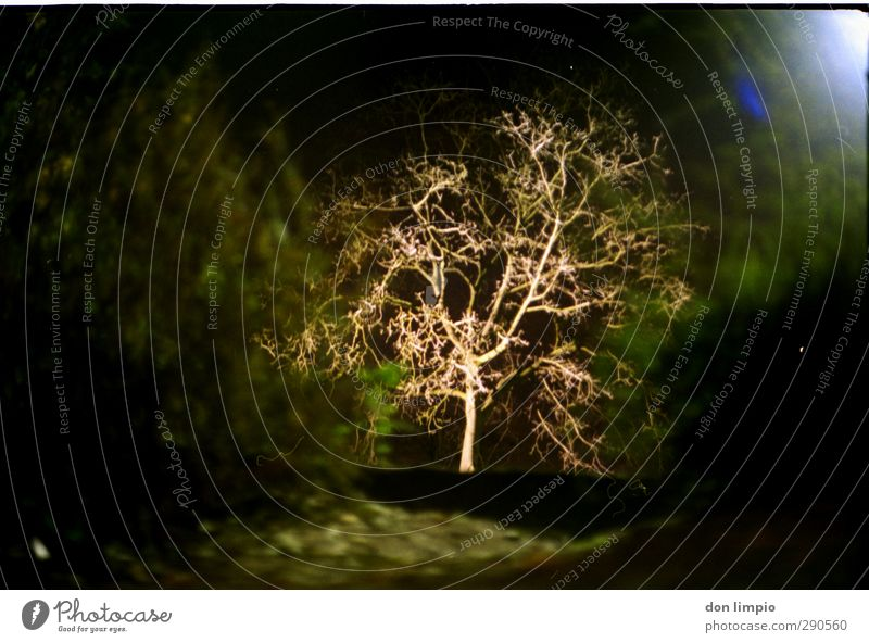 baum Baum Sträucher Park Stimmung analog Farbfoto Außenaufnahme Nacht Kunstlicht Licht Kontrast Schwache Tiefenschärfe Zentralperspektive