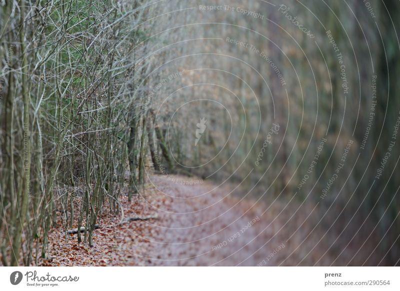 Waldspaziergang Umwelt Natur Landschaft Pflanze Winter Baum Sträucher grau grün Wege & Pfade Tilt-Shift Zweig Farbfoto Außenaufnahme Menschenleer Tag Unschärfe