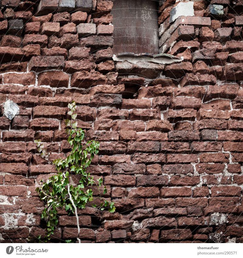 Prozesse alt grün Stadt Pflanze Haus Fenster Wand Senior Mauer Architektur Stein braun Wachstum Perspektive trist Hoffnung