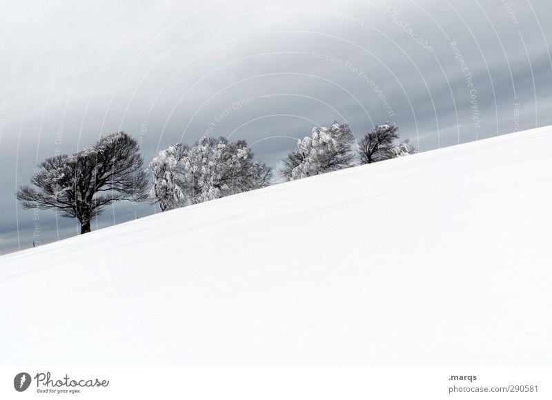 4 Ausflug Winter Schnee Winterurlaub Umwelt Natur Landschaft Gewitterwolken schlechtes Wetter Eis Frost Baum Buche einzigartig kalt schön Stimmung Perspektive