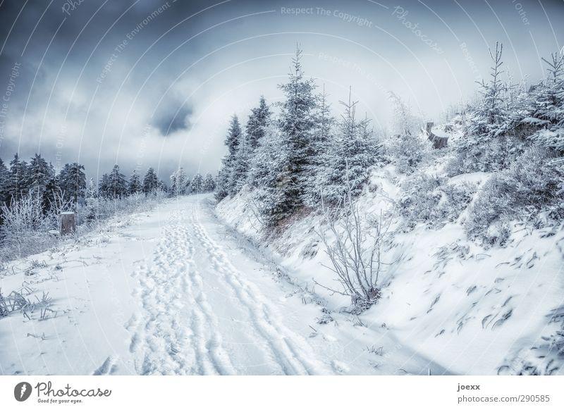 So könnte es aussehen Wintersport Natur Landschaft Pflanze Himmel Wolken Wetter schlechtes Wetter Schnee Wald Berge u. Gebirge Wege & Pfade kalt schwarz weiß