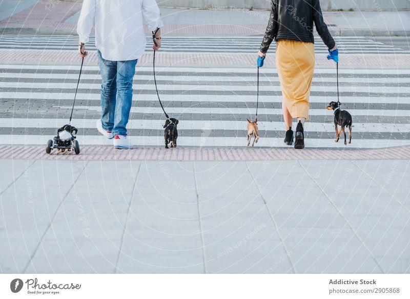 Paar Spaziergänge mit Hunden und Haustier mit Rollstuhl auf der Straße gelähmt Behinderte Dackel laufen deaktiviert physisch Erholung Medikament Mann Frau
