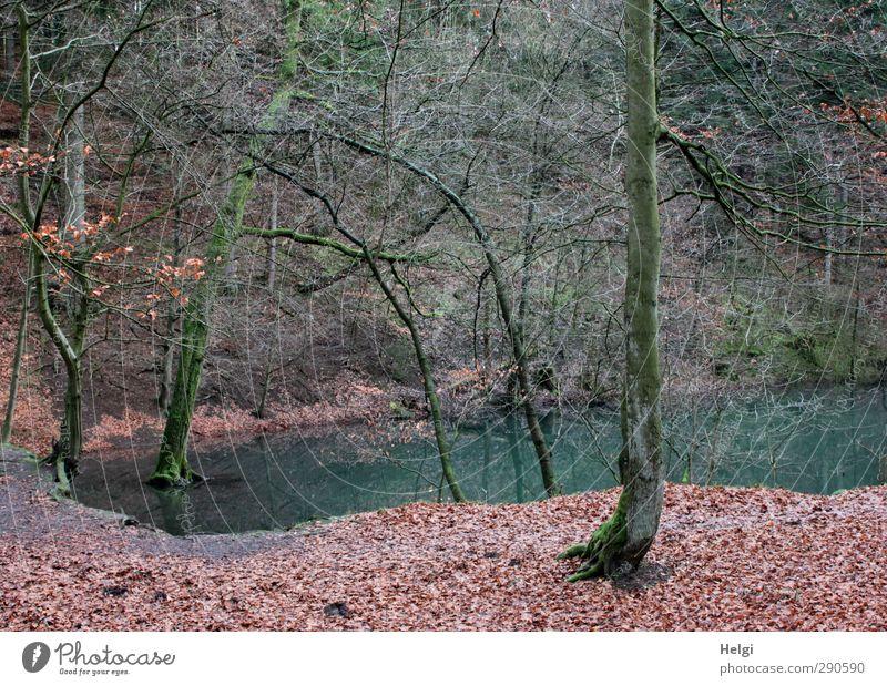 der Blaue See... Natur blau grün Pflanze Blume Einsamkeit Blatt Winter ruhig Landschaft Wald Umwelt kalt braun natürlich