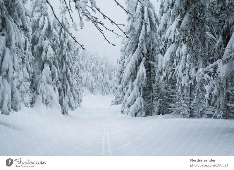 Der Winter kehrt zurück.... Natur Ferien & Urlaub & Reisen weiß Pflanze Winter ruhig Landschaft Erholung Wald Schnee Leben Wege & Pfade Schneefall Stimmung Eis Klima