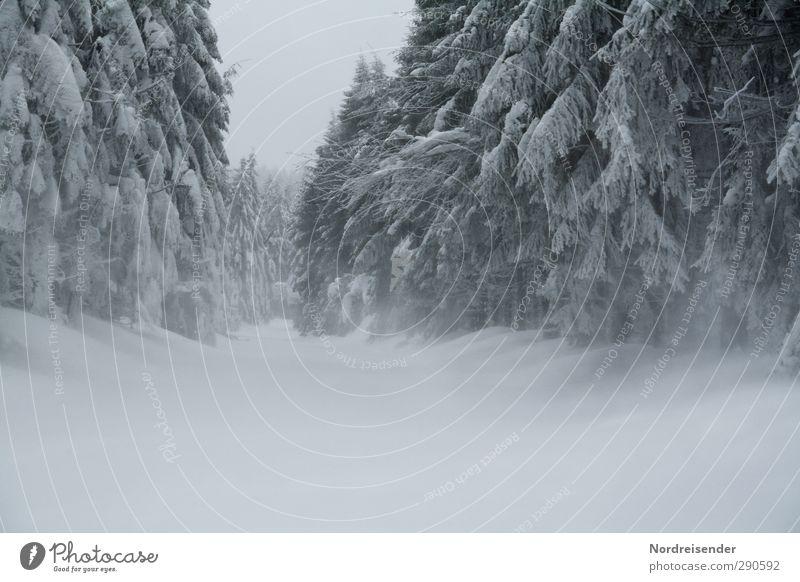 ....mit Schneesturm Natur weiß Pflanze Einsamkeit Winter Landschaft Wald dunkel kalt Leben Wege & Pfade Stimmung Eis Wind Klima