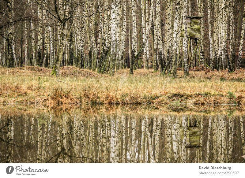 Parallelwelten Umwelt Natur Landschaft Pflanze Tier Wasser Frühling Sommer Herbst Gras Sträucher Wald Seeufer Flussufer braun gelb grün schwarz weiß Birke Jagd