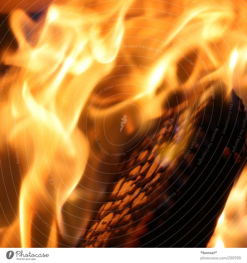 fire! Natur gelb Wärme Bewegung Holz hell glänzend orange wild leuchten Kraft ästhetisch bedrohlich Warmherzigkeit Urelemente Feuer