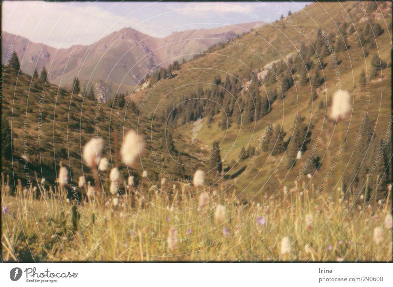 This is Kasachstan! Natur Ferien & Urlaub & Reisen Pflanze grün Erholung Blume Einsamkeit Landschaft Ferne Berge u. Gebirge Wiese Gras natürlich Freiheit