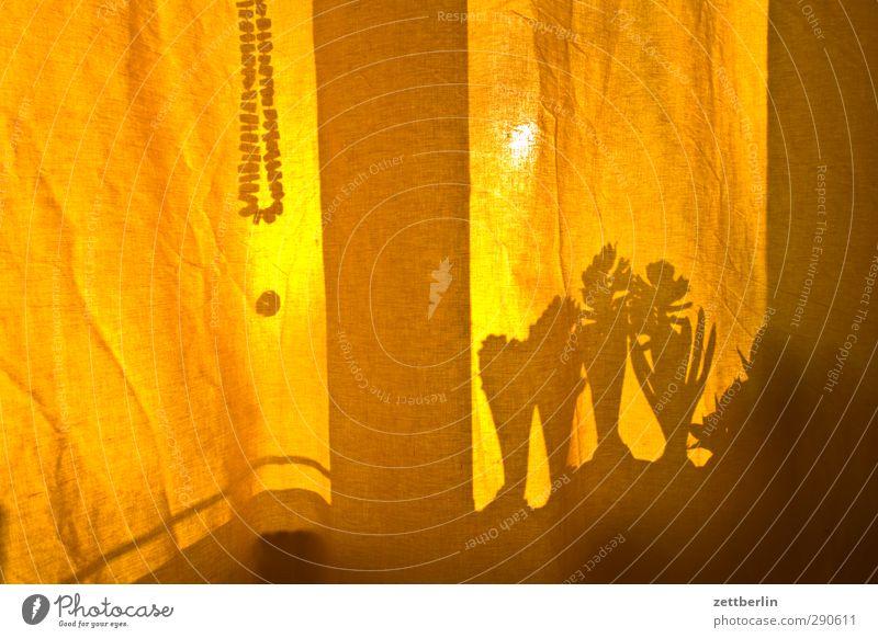 Gardine Pflanze Freude Blatt gelb Gefühle Frühling Berlin Glück Innenarchitektur Blüte Raum Wohnung Freizeit & Hobby Zufriedenheit Lifestyle Häusliches Leben