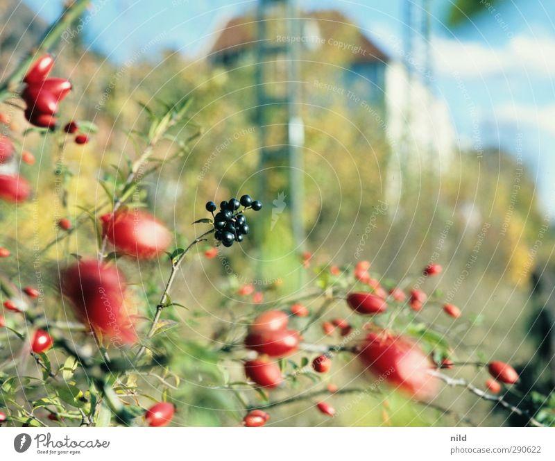 Südbahnhof Umwelt Natur Pflanze Herbst Schönes Wetter Sträucher Beeren Hagebutten Park Haus Gebäude blau grün rot Bahnanlage Stadt Farbfoto Außenaufnahme