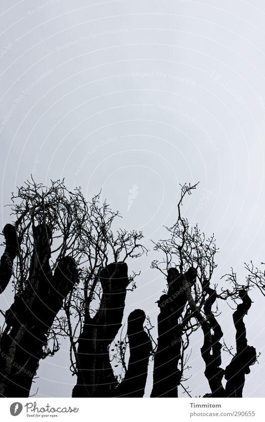 250. I Have The Same Old Blues Natur Pflanze Himmel Baum Holz Wachstum ästhetisch dunkel einfach grau schwarz Gefühle dünn Ast Farbfoto Gedeckte Farben