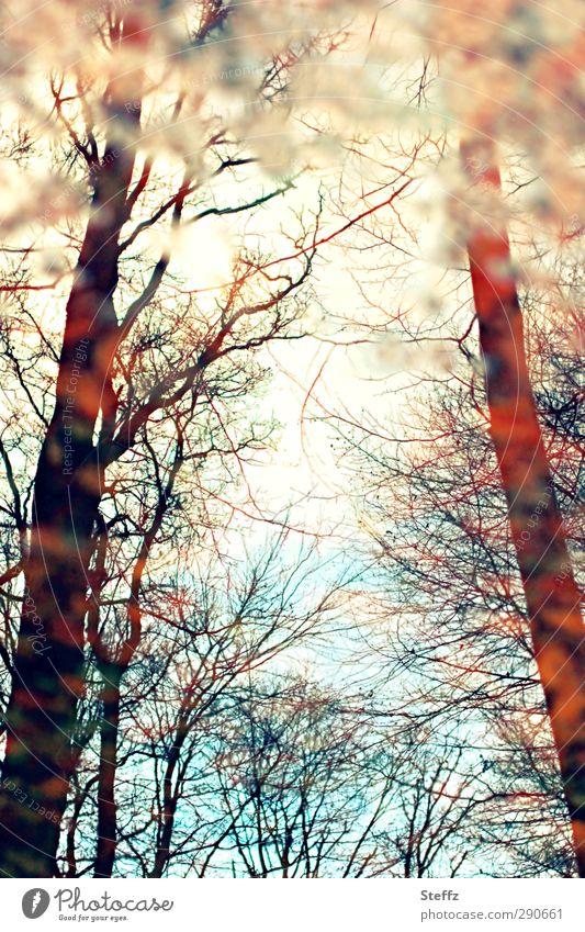 Wahrnehmung Umwelt Natur Landschaft Pflanze Herbst Baum Ast Zweig Wald Herbstwald träumen Lichtstimmung Vergänglichkeit Wandel & Veränderung Verzerrung