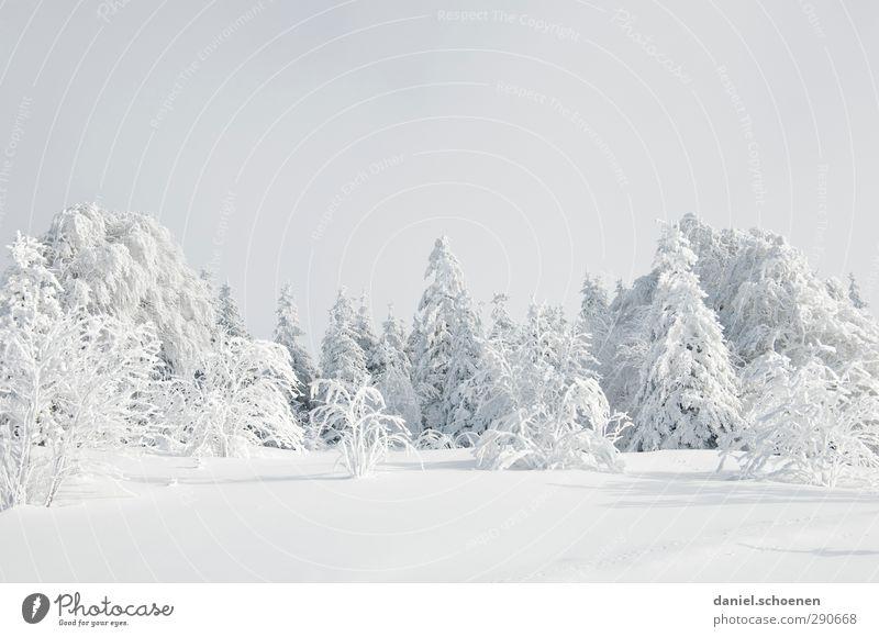 Schneeschuhe anziehen und los geht's Ferien & Urlaub & Reisen Winter Winterurlaub Natur Landschaft Klima Eis Frost Wald hell Schwarzwald Gedeckte Farben