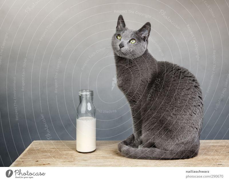 Stilleben mit der Katze blau Tier ruhig Erholung gelb Holz grau glänzend sitzen Zufriedenheit elegant leuchten weich niedlich beobachten