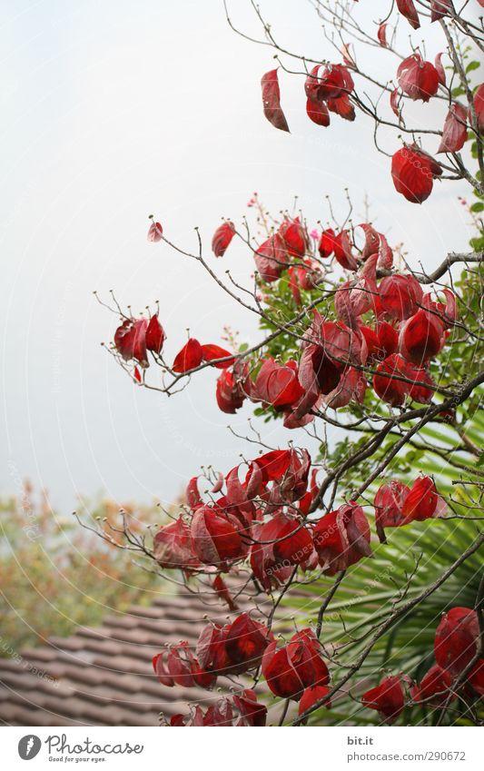 Ja pan in Te ssin Himmel Natur grün Pflanze Baum rot Haus Umwelt Blüte Garten Park Sträucher Dach Blühend Dorf Hütte
