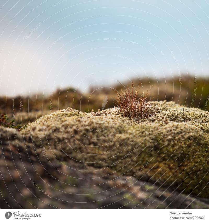 Nordisch harmonisch Sinnesorgane ruhig Duft Natur Pflanze Sommer Moos Wildpflanze Felsen Blühend Wachstum Freundlichkeit trocken weich Leben Vergänglichkeit