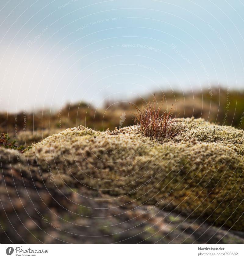 Nordisch Natur Sommer Pflanze ruhig Leben Felsen Wachstum weich Vergänglichkeit Freundlichkeit trocken Blühend Duft harmonisch Moos Sinnesorgane