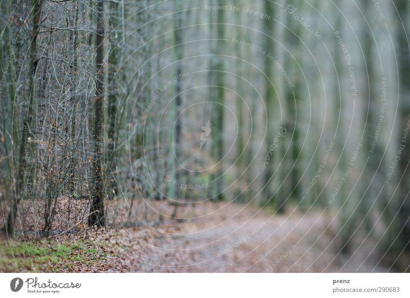 Waldspaziergang 2 Natur grün Pflanze Baum Landschaft Umwelt Wege & Pfade grau Sträucher Tilt-Shift