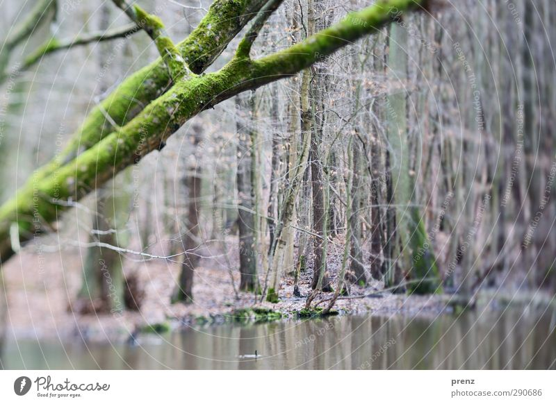 250 Natur grün Wasser Pflanze Baum Landschaft Wald Umwelt grau Tilt-Shift Sumpf