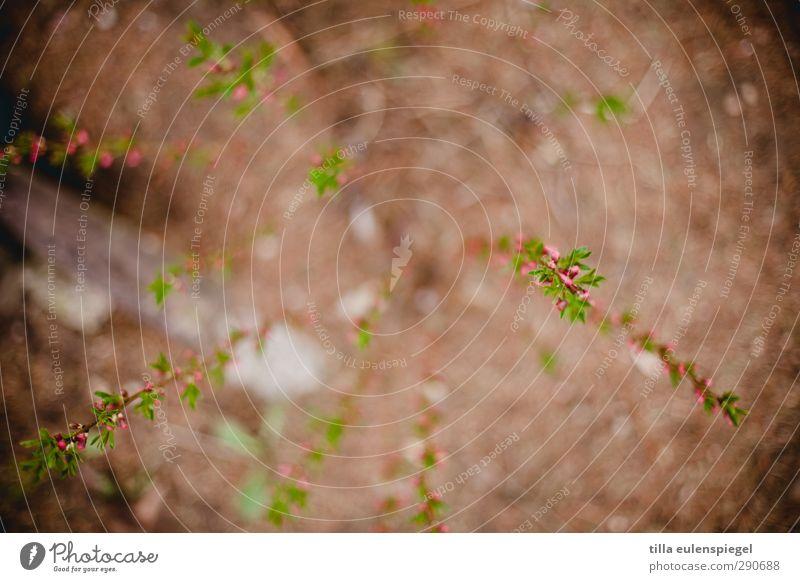 nix Natur grün Pflanze Blüte braun natürlich rosa Erde Sträucher Blühend Zweig