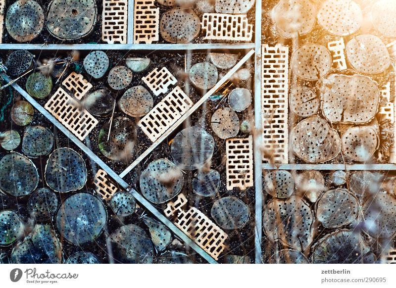 Insektenhotel Freizeit & Hobby Häusliches Leben Wohnung Umwelt Natur Garten Park Bauwerk Mauer Wand Tier Wildtier füttern schlafen Mitgefühl gehorsam