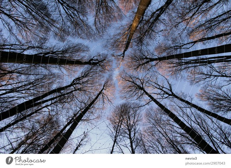 Kahle Bäume Natur Herbst Winter Baum alt dunkel gigantisch groß hoch nachhaltig Spitze Wald Waldlichtung Waldrand Höhe aufwärts Waldarbeit Forstwirtschaft