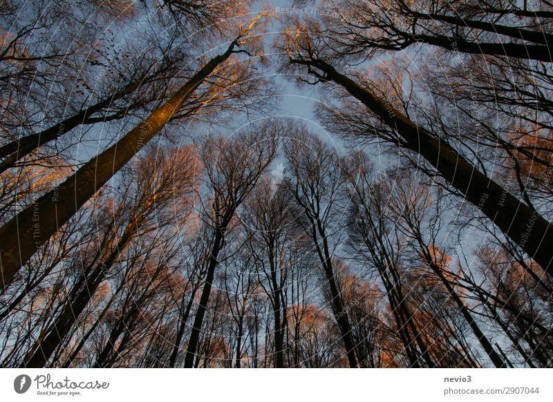 Kahle Bäume Natur Landschaft Baum Nutzpflanze alt dunkel wild Wald Waldlichtung Waldrand Forstwirtschaft Forstwald Silhouette Sonnenlicht Abendsonne Wärme