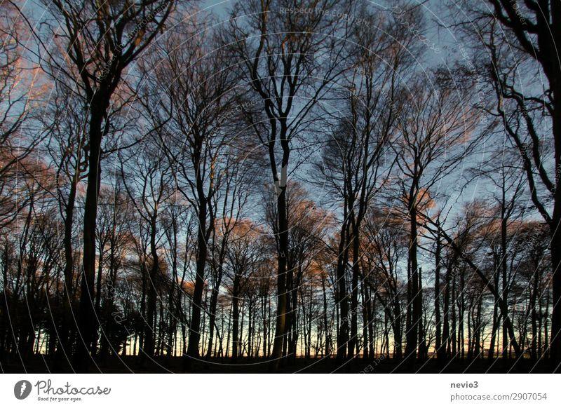 Kahle Bäume Natur Baum Wald alt dunkel Waldlichtung Waldrand Forstwirtschaft Forstwald Silhouette schwarz Sonnenuntergang Abend Abenddämmerung Wärme