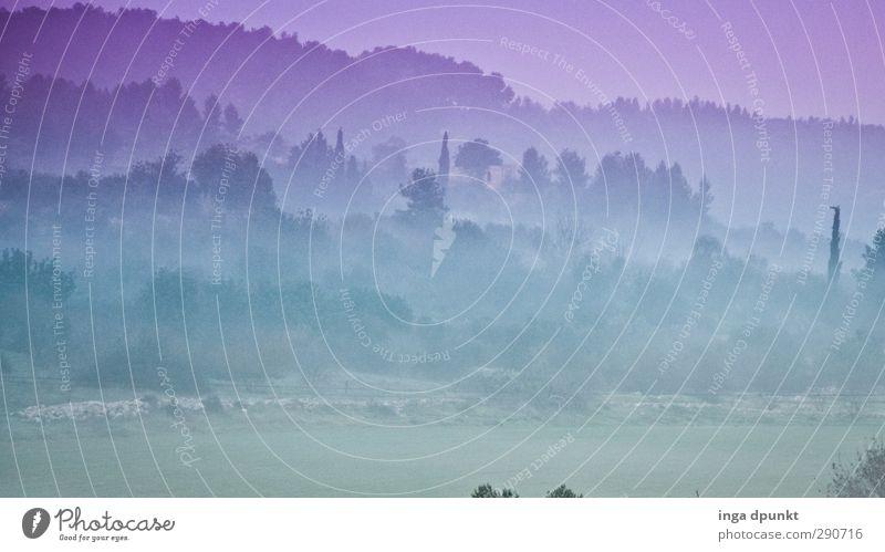 Märchenland II Umwelt Natur Landschaft Pflanze Frühling Klima Nebel Israel Naher und Mittlerer Osten Abenteuer Ferien & Urlaub & Reisen Phantasie schön