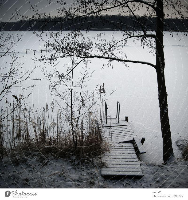 Schneesee Umwelt Natur Landschaft Pflanze Himmel Horizont Winter Klima Wetter Schönes Wetter Eis Frost Baum Sträucher Zweige u. Äste Seeufer Steg Holz frieren
