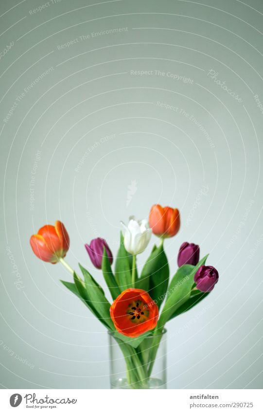 Ein bunter Strauß drinnen gegen das triste Grau draußen! grün weiß Blatt Freude Blüte Frühling grau orange Dekoration & Verzierung Glas Fröhlichkeit Blühend