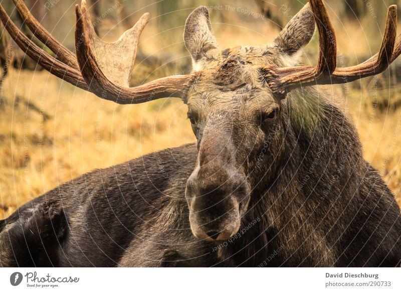 Prachtkerl III Natur grün weiß Tier schwarz Wald gelb Frühling Kopf braun gold Wildtier Schönes Wetter gefährlich Fell Ohr