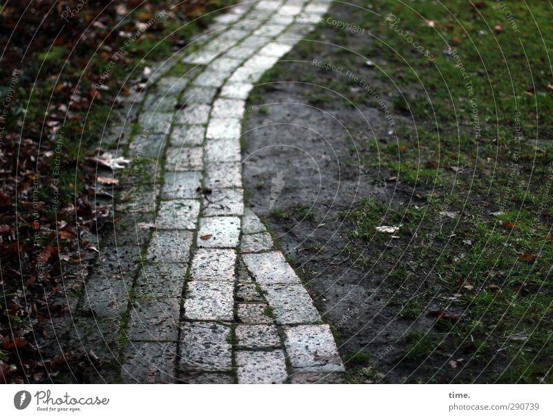 Heimweg Winter Blatt Grünpflanze Garten Park Wiese Fußgänger Wege & Pfade pflastern Pflastersteine Gartenweg nass Vertrauen Verschwiegenheit Weisheit Müdigkeit