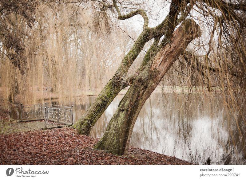 silence at the lakeside Baum Einsamkeit ruhig Landschaft Herbst Traurigkeit braun natürlich Park orange Idylle trist Vergänglichkeit Ewigkeit Seeufer Geländer