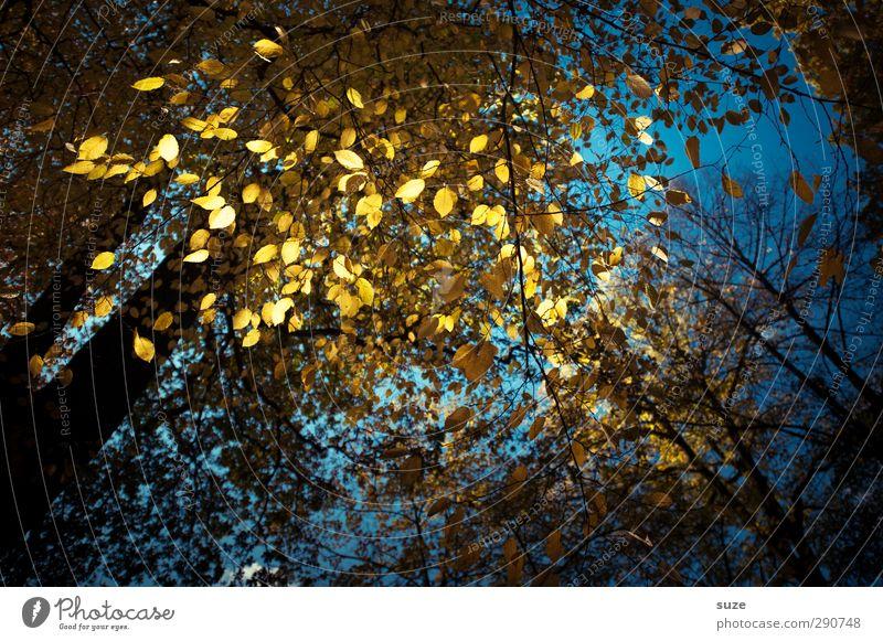 Flitter-Glitter blau schön Blatt dunkel Wald gelb Herbst Feste & Feiern außergewöhnlich glänzend leuchten gold Baumkrone Herbstlaub herbstlich Nachtleben
