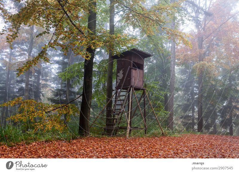 Hochsitz Förster Landwirtschaft Forstwirtschaft Umwelt Natur Herbst Nebel Baum Wald Stimmung Idylle nachhaltig Farbfoto Außenaufnahme Menschenleer