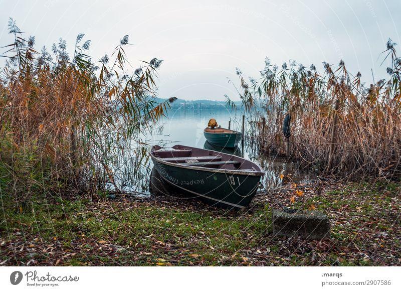 Ufer Himmel Natur Pflanze Landschaft Erholung ruhig Herbst Umwelt See Stimmung Seeufer Urelemente Schilfrohr Ruderboot ankern Bodensee