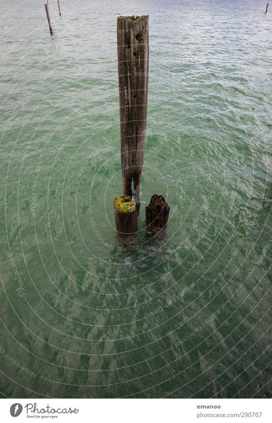 Holz im Wasser Umwelt Natur Landschaft Klima Wetter Baum Moos Wellen Küste See Schifffahrt Hafen alt kaputt grün Pfosten Poller Bodensee Immenstaad verwittert