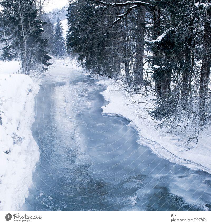 frozen Wellness Erholung ruhig Winter Schnee Umwelt Natur Urelemente Eis Frost Baum Tanne Ast Wald Bach Saanenland dünn eckig fest kalt nass blau weiß