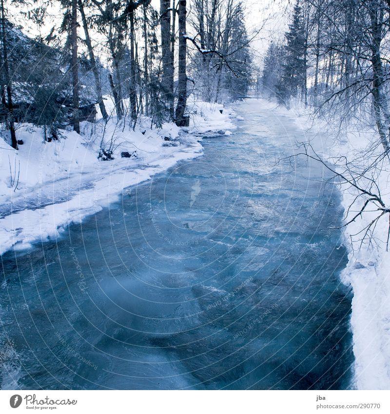 frozen II Erholung ruhig Winter Schnee Umwelt Natur Urelemente Eis Frost Baum Tanne Ast Wald Bach Saanenland dünn eckig fest kalt nass blau weiß bedrohlich