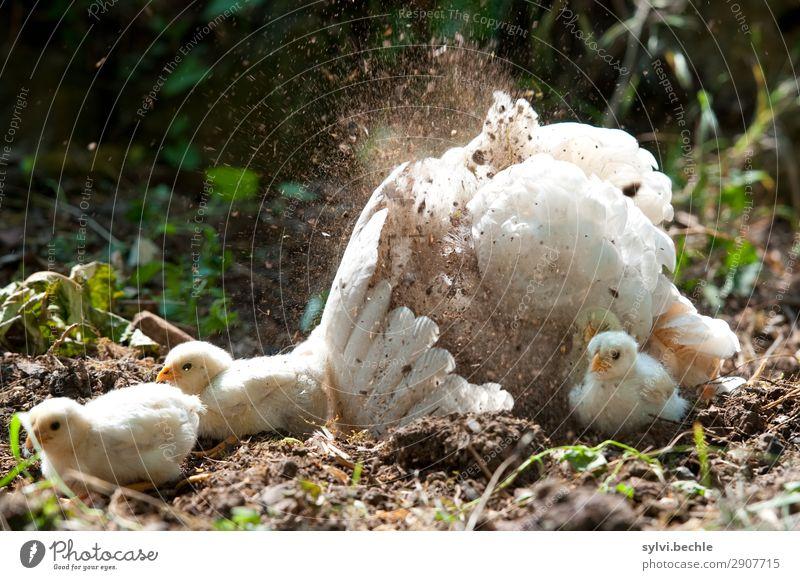 passiv Baden :-D Natur Gesunde Ernährung Sommer Tier Tierjunges Glück Gras Garten Freiheit Zufriedenheit Tiergruppe Lebensfreude Feder Flügel Sicherheit