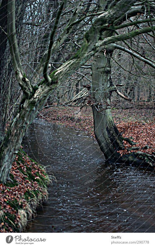 der Waldbach rauscht.. Natur Baum Landschaft ruhig Blatt dunkel Umwelt Traurigkeit Herbst trist Ast Fluss Zweig Herbstlaub Bach