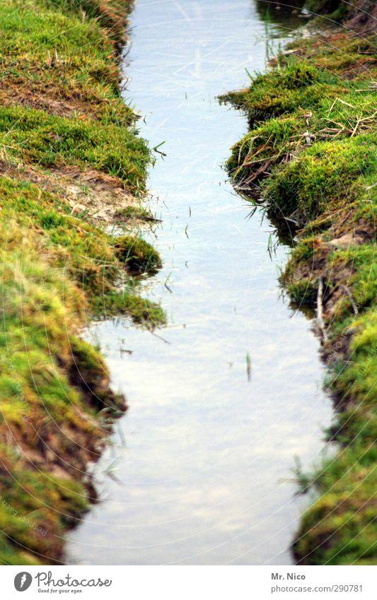 mini - fjord Umwelt Natur Landschaft Wasser Gras Moos Wiese Feld Moor Sumpf Bach nass dreckig Offroad Traktorspur Pfütze Flussufer Erde Umweltschutz