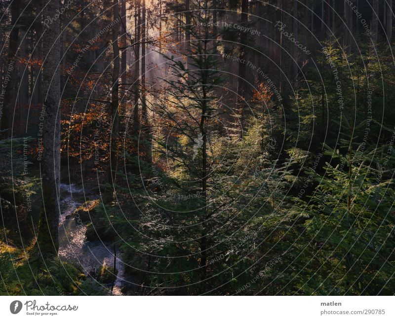 soleil Landschaft Pflanze Klimawandel Schönes Wetter Baum Moos Farn Wald dunkel braun grün weiß Schneeschmelze Bach Gedeckte Farben Außenaufnahme Menschenleer