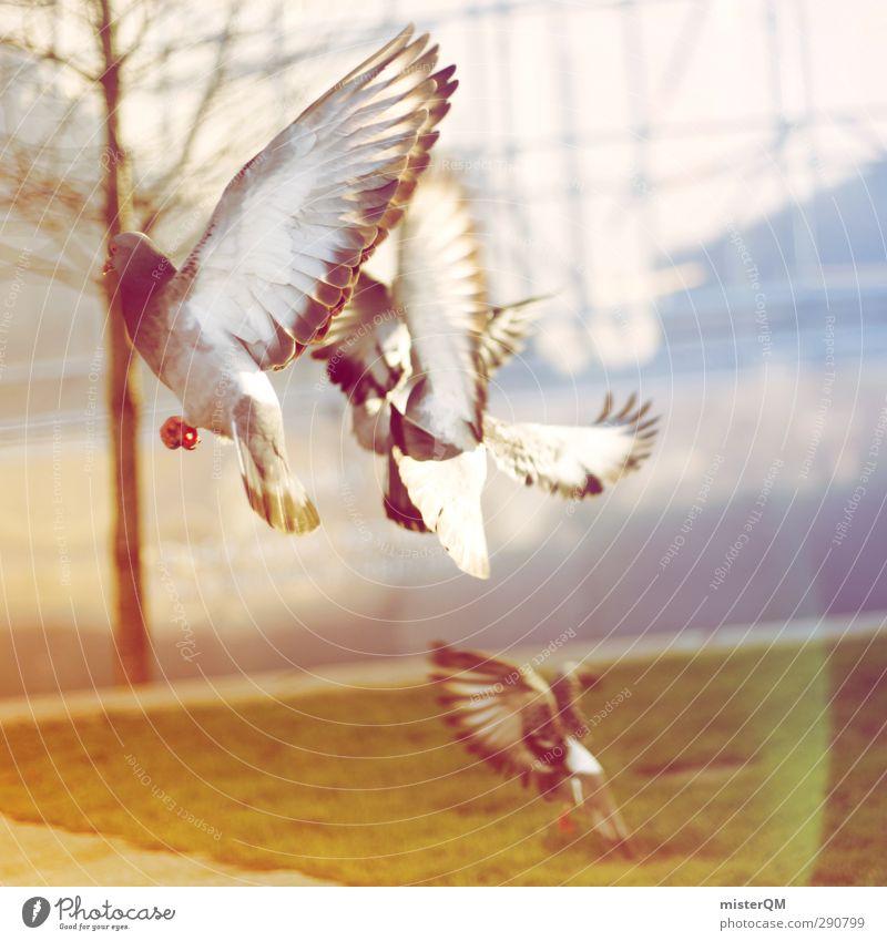 Away We Fly. Kunst ästhetisch fliegen fliegend Vogel Taube Vögel füttern Feder Flügel Luft Stadt erschrecken Flucht Tier Farbfoto Gedeckte Farben Außenaufnahme