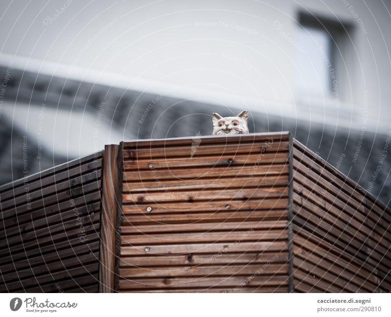 watching Stadt Einsamkeit Haus Herbst oben grau braun hoch Idylle trist niedlich einfach Neugier Kitsch Balkon entdecken