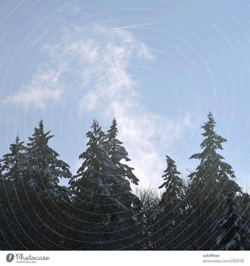 Süppchen kochen Umwelt Natur Landschaft Pflanze Himmel Wolkenloser Himmel Sonnenlicht Winter Schönes Wetter Eis Frost Schnee Baum Wald kalt Tanne Rauchzeichen