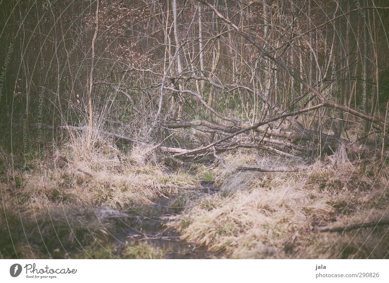 wald Natur Pflanze Baum Wald Umwelt natürlich wild Sträucher trist trocken Wildpflanze